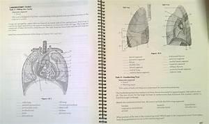 Functional Human Anatomy Manual Laboratorio Anatomia Guia