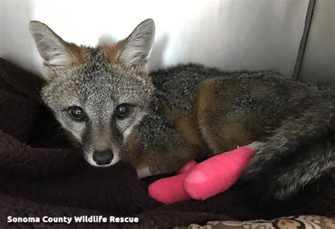 join   remember animal victims   wildfires