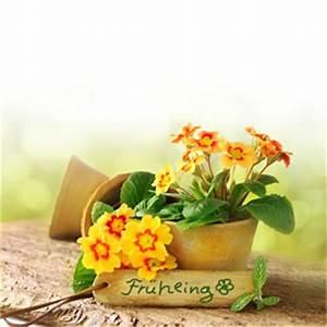 Frühlingsdeko Selber Basteln : fr hlingsdeko basteln ideen und tipps ~ Markanthonyermac.com Haus und Dekorationen