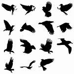 Bird Icon Silhouette Silhouettes Icons Shadow Engine