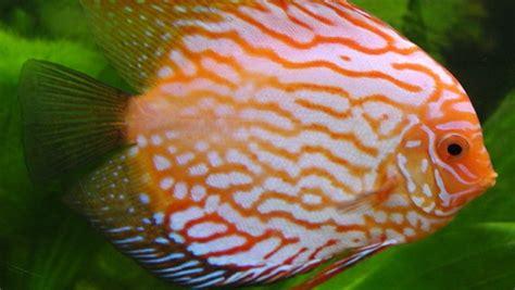 freshwater fish types      fish tank