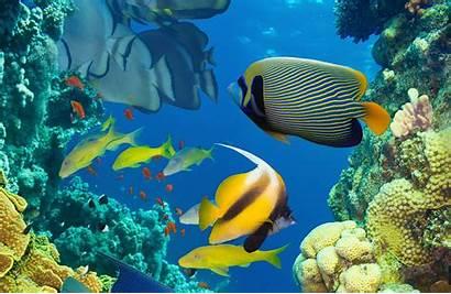 Underwater Fish Tropical Ocean Sea Reef Fishes