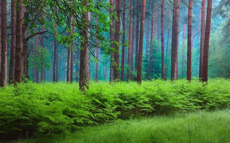 green misty forest hd wallpaper background image