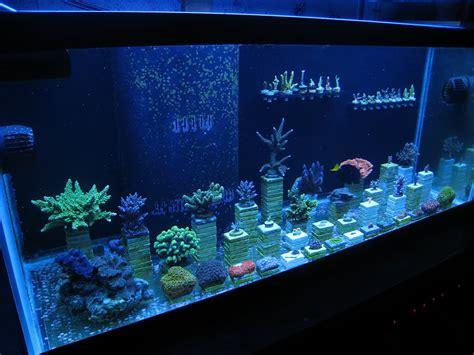 Gbi Tile Jacksonville Florida by 100 Bottom Freshwater Aquarium Build Album Cichlid
