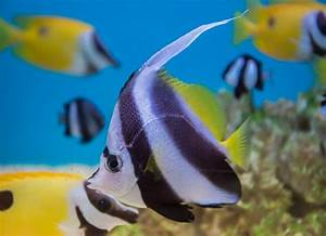 5 Facts About Angelfish Petmd