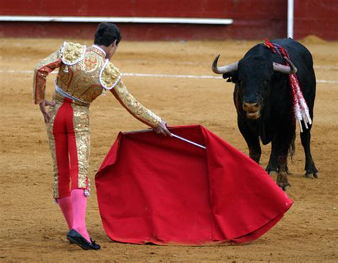 All About Bull Fighting