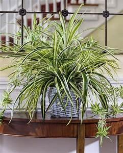 Pflanzen Im Treppenhaus : 119 besten einzigartige zimmerdeko f r eine gem tliche wohnung bilder auf pinterest ~ Orissabook.com Haus und Dekorationen