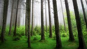 Forest, Trees, Wallpapers, Hd, Desktop, And, Mobile, Backgrounds