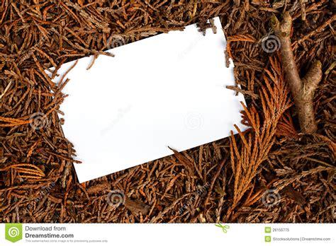 woodland border stock image image  evergreen conifer