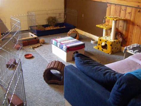 kaninchen in der wohnung kaninchen info wohnungsgehege mit gitterelementen tiergerecht gestalten