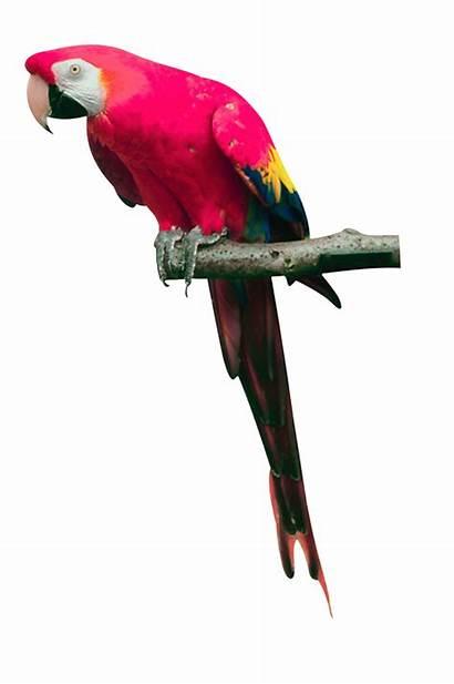 Parrot Macaw Transparent Bird Clipart Collorful Picsart
