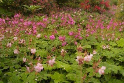 bodembedekkers praktisch en mooi landbouwleven