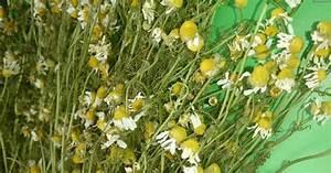 Лекарств травы для печени