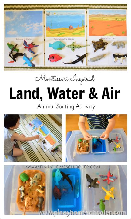 introducing toddlers  animals  land water  air