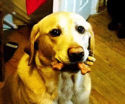 bilder und animierte gifs von lustige hunde gifmania