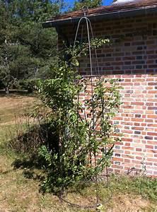 Support Pour Rosier Grimpant : tuteurs pour rosiers grimpants support pour rosier ~ Premium-room.com Idées de Décoration