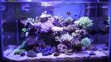 sea reef aquarium marine aquarium reef tank 55gallon 200l