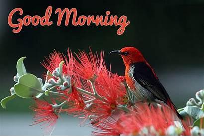 Morning Bird Pink Quotes Wallpapers Baltana