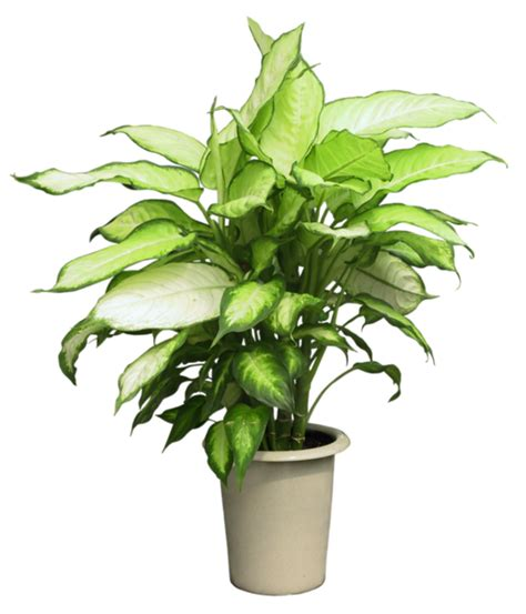 sorte de plante verte photo de fleur une pensee fleuriste