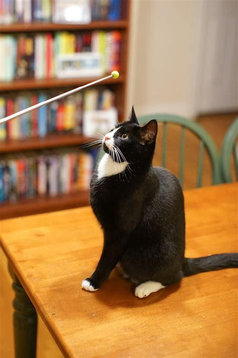 clicker train  cat adventure cats
