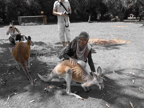 backpackers  perth western australia kangaroo