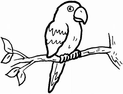Parrot Coloring Pages Animals Macaw Branch