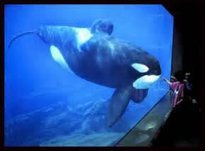 Oregon Coast Aquarium Keiko the Whale