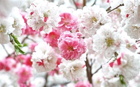 fond d écran fleur image fond ecran fleur pingl par andrea cos sur