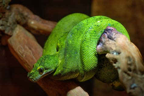 Green Snake On Tree Branch · Free Stock Photo