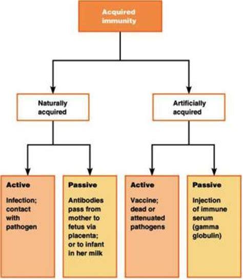 acquired immunity  adaptive immunity  specific defence