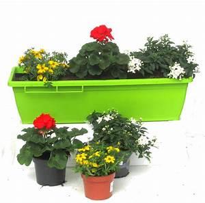 Winterpflanzen Für Balkonkästen : balkonpflanzen set f r balkonk sten 60 cm lang sommer pflanzen versand f r die besten ~ Indierocktalk.com Haus und Dekorationen
