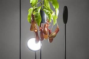 Lampen Für Pflanzen : was verbindet die optimale zimmerpflanzen pflege und die beleuchtung ~ A.2002-acura-tl-radio.info Haus und Dekorationen