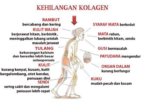 Bibit Collagen Dan Manfaatnya bibit collagen cv mecca pemutih kulit tercepat