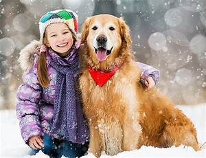winter care wichita veterinarians cimarron animal hospital With winter dog care
