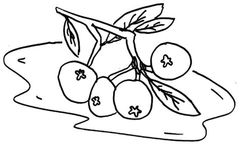 Free Coloring Pages Of Blueberry