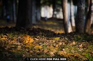 Autumn Black Brown Grass Green Leaves Orange Trees wallpaper