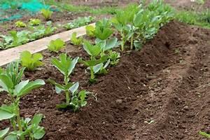 Quoi Planter En Automne : pourquoi et comment butter les pois haricots et f ves ~ Melissatoandfro.com Idées de Décoration