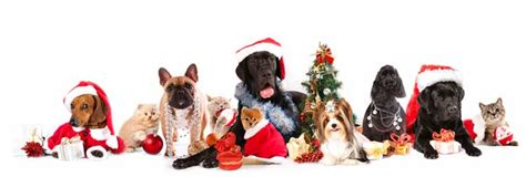 holiday dog walking and pet sitting green paws chicago