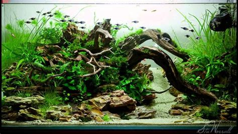 Nature Aquascape by Nature Aquascape Style Part 2