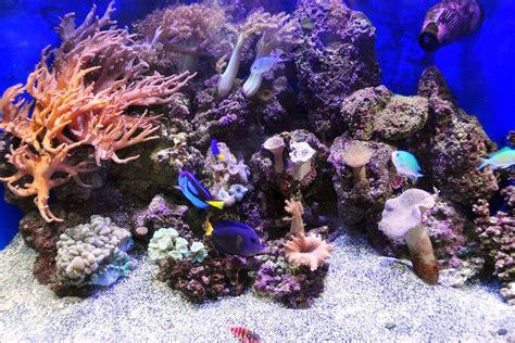 Aquascaping Live Rock by Aquascaping Live Rocks In Your Saltwater Aquarium