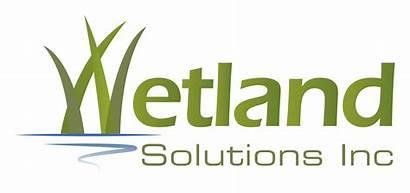 Wetlands Treatment Wetland Solutions Aquatic Ecology