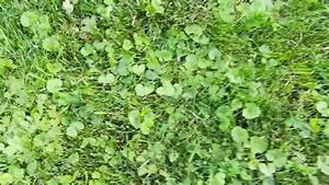 Unkraut Bestimmen Durch Bilder : spritzmittel gegen unkraut 4 5 wochen alter rasen unkarut durch mutterboden help was hilft ~ Whattoseeinmadrid.com Haus und Dekorationen
