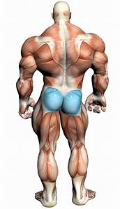 Glute Kick Back  Video Exercise Guide  U0026 Tips