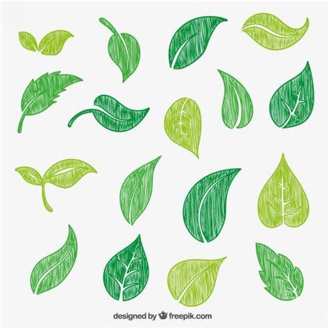 Dibujado a mano las hojas verdes Descargar Vectores gratis