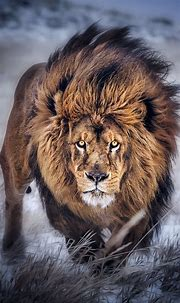 Pin by Jackie G on phone wallpapers   Animals wild ...