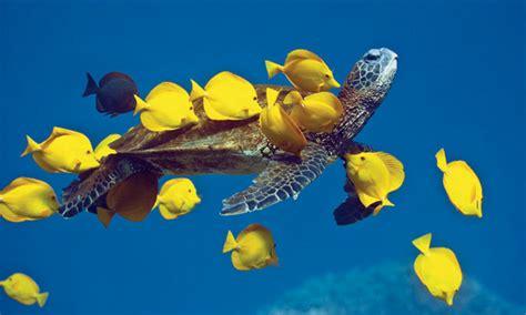 scrub days  turtle hospital rescue rehab release