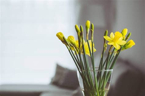 Arredare la casa con i fiori è il modo più semplice per portare un po' di allegria e vivacità nelle vostre stanze. Arredare casa con i fiori: Ecco qualche consiglio   Meka magazine