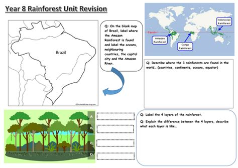 rainforest revision worksheet secondary geography
