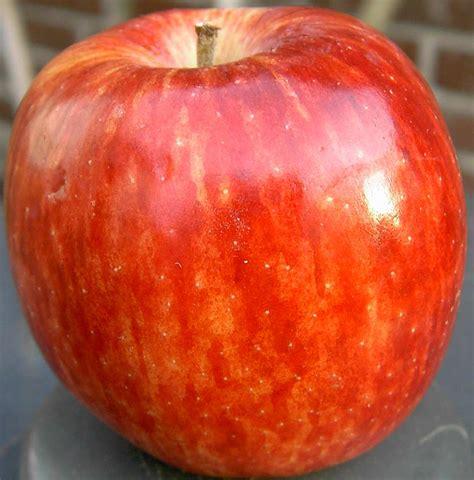 File:Apple red delicius stalk.jpg - Wikimedia Commons