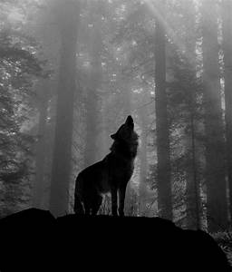 12 best pics images on Pinterest | Backgrounds, Teen wolf ...